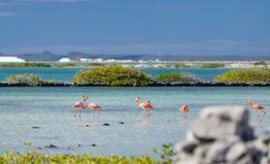 Bílaleiga Bonaire