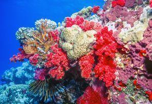 Bílaleiga Coral Coast, Fijieyjar